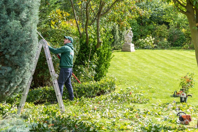 Tips for looking after your garden