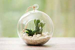 Delightful additions to Plantpak terrariums