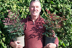 Wyevale Nurseries to introduce recyclable plant pots