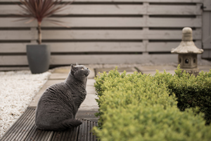 A feline-friendly garden with Cats Protection