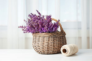 Lavender plants in basket