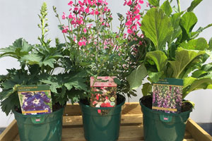Hawkesmill Nurseries Two & Three Litre Perennials