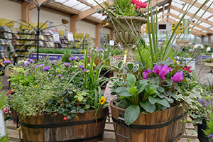Outdoor plant sales continue to grow