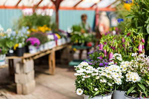 Outdoor plant sales were still growing strong in December