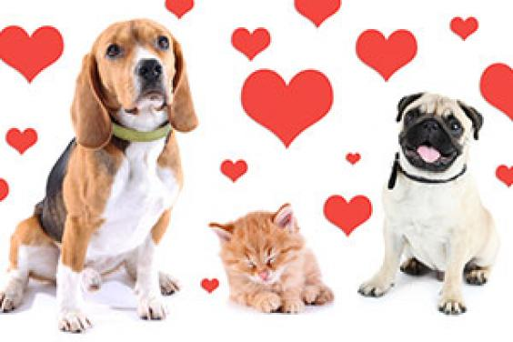 Valentine's Day dangers for cats and dogs