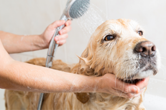 Dog receiving grooming treatment